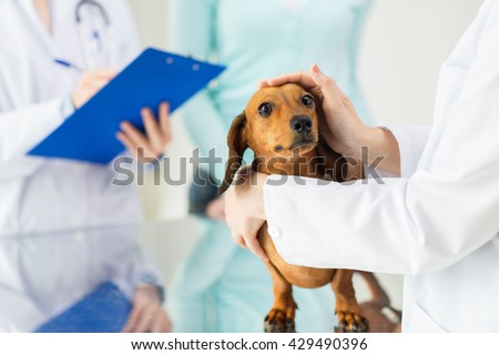 medicine, pet care and people concept - close up of dachshund dog and veterinarian doctor with clipboard taking notes at vet clinic - stock photo