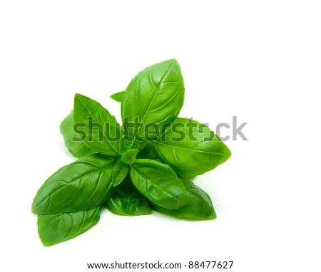 Mediterranean diet: fresh basil on white background - stock photo