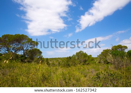 Mediterranean forest landscape in Menorca near Cala Macarella at Balearic islands