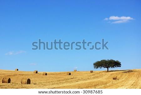 Mediterranean landscape from Alentejo. - stock photo