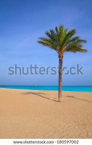 Mediterranean palm tree in Playa del Paraiso villajoyosa Alicante spain - stock photo