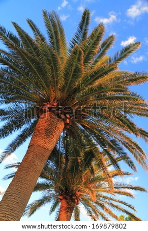Mediterranean palm trees in sunny day  - stock photo