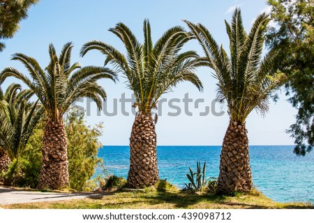 Mediterranean Sea palm trees on the seaside, Crete, Greece.