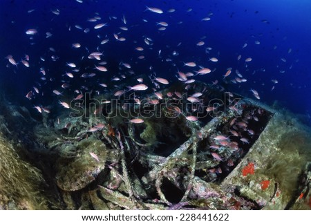Mediterranean Sea, Sardinia, U.W. photo, wreck diving, sunken world war II submarine and a school of Anthias - FILM SCAN - stock photo