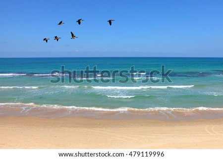 Mediterranean seaside landscape with migrating birds. Clear blue sky and calm water with soft sea surf.