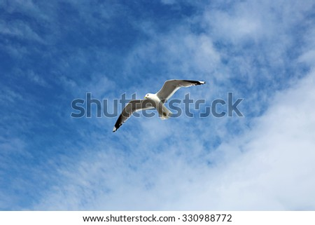 Mediterranean white seagull flying against the cloudy sky