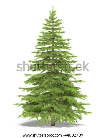 Medium spruce on a white background. It's 3D image.