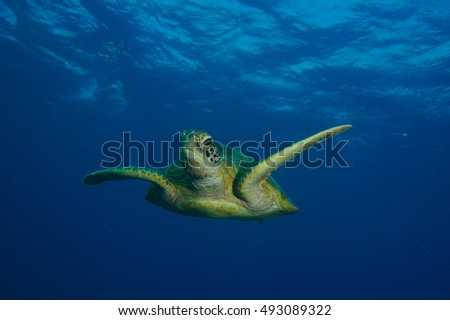 Meeting a Turtle underwater