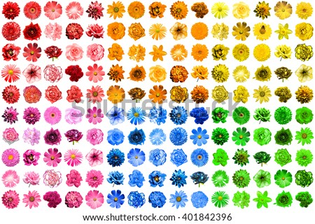 Mega pack of 150 in 1 natural and surreal blue, yellow, red, pink, green and orange flowers isolated on white - stock photo