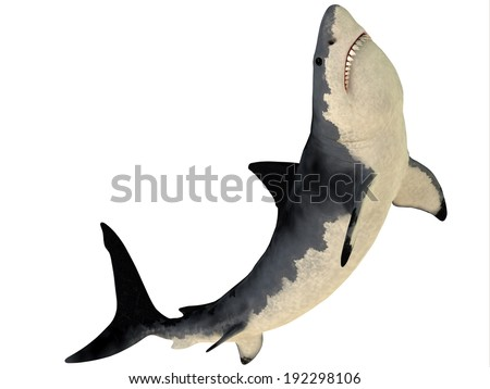 Megalodon Profile - Megalodon is an extinct species of shark that grew to 18 meters or 59ft and lived in the Cenozoic Era. - stock photo