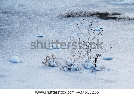 melancholic photo of the sear plant growing from the ice in winter