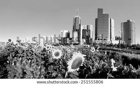 melbourne australia in black and white with a flower bed of sunflowers in the foreground - stock photo