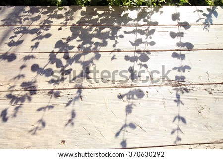 Melissa silhouette. on old rustic table. Country garden by sunny morning. - stock photo