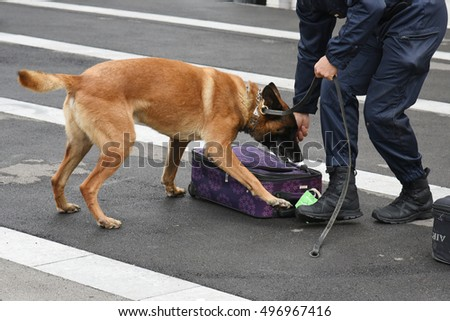 MELUN,FRANCE - SEPTEMBER 2016:gendarmerie demonstration with trained dogs
