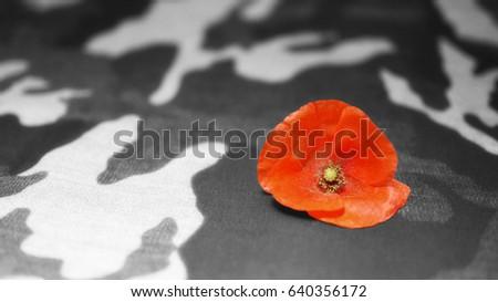 Memorial day poppy flower on black stock photo 100 legal memorial day poppy flower on black and white camouflage background mightylinksfo