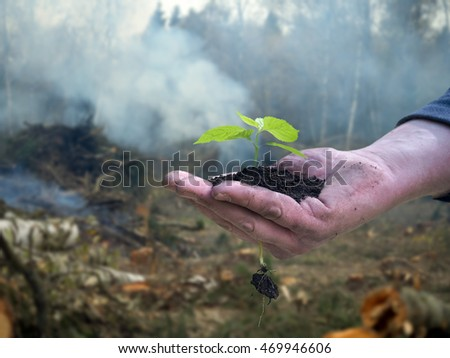 Men working hand holds a young plant. Background - tree felling, cutting of trees, smoke. The concept of environmental protection, forest, ecology