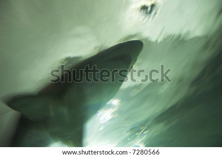 Menacing blur of a hunting shark passing above. - stock photo