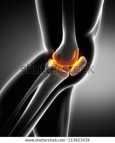 Meniscus and knee cartilage anatomy - stock photo