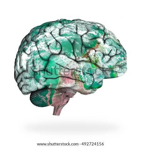 a description of the nature of the human brain Human physiology/the nervous system  the central nervous system includes the brain and  the nature and intensity of the immediate effects of cannabis.