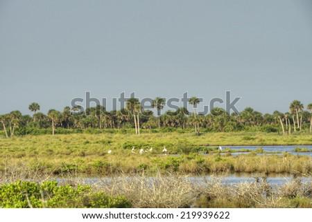 Merritt Island Wildlife Refuge. - stock photo