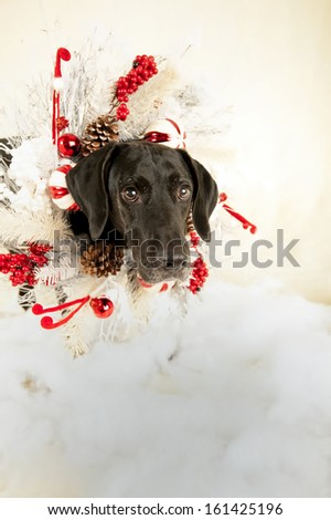 Merry Christmas - stock photo