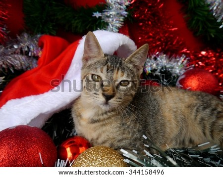 merry Christmas and a happy new year Cards decoration sweet Baby cats