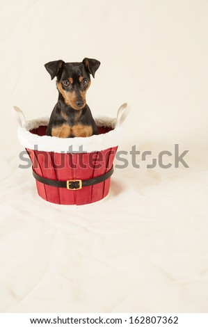 Merry Christmas from dog - stock photo