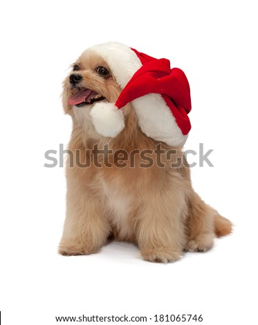 merry christmas with cute mixed breed dog isolated in white background with clipping path