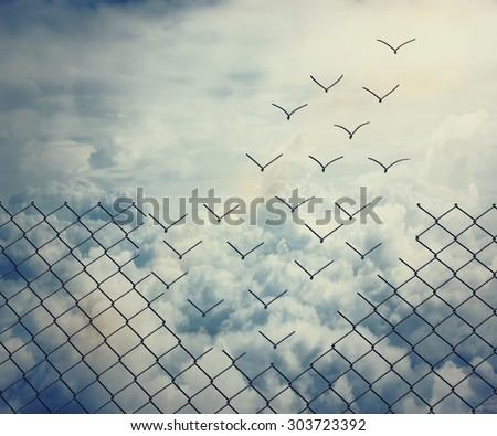 Metallic wire mesh transform into flying birds over the sky - stock photo