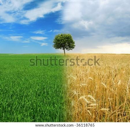 Metamorphosis - change in nature - stock photo