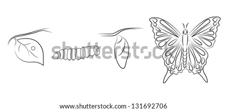 Metamorphosis of a butterfly. Raster version. - stock photo