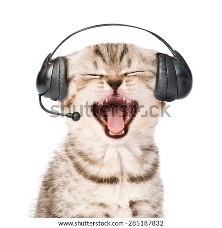 mewing kitten with phone headset. isolated on white background - stock photo