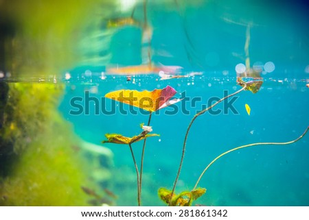 Mexican cenote underwater - stock photo