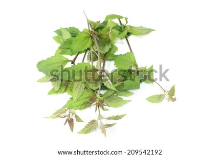Mexican dream herb on a light background - stock photo
