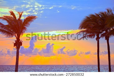 Miami Beach, Florida colorful summer sunrise or sunset with palm trees silhouette, beautiful cloudy sky and ocean  - stock photo