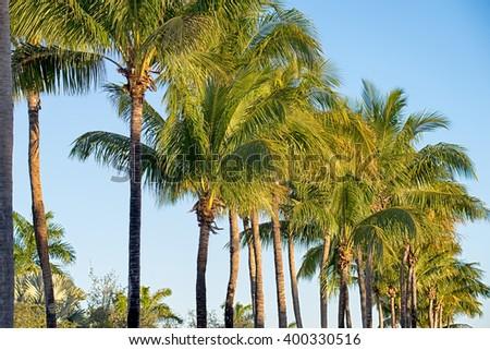 miami florida beach scenes on a sunny day - stock photo
