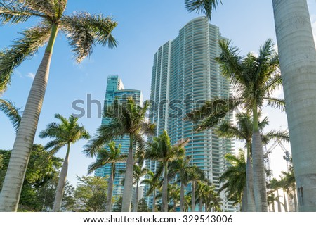 Miami high rise condominiums with rows of palm trees in foreground. - stock photo