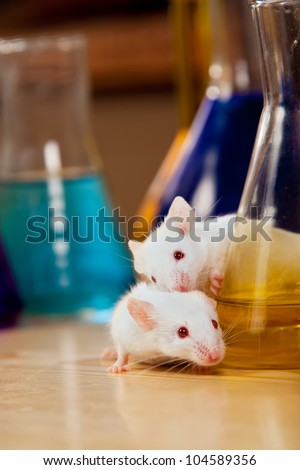 Mice on a lab table surrounded by chemical glassware - stock photo