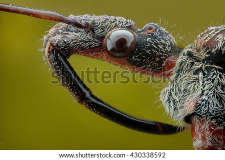 Micrograph of the head of bedbug murderer made with the technique of stacking - stock photo