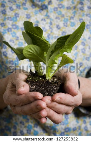 Mid section view of a woman holding a plant