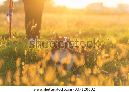 Middle age woman playing with her border collie dog. Dog is relaxing a bit holding the stick in its mouth - stock photo