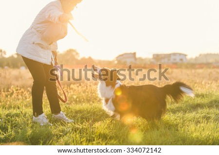 Middle age woman playing with her border collie dog. photo at sunset with sun flare effect. Happy dog catching the wood stick - stock photo
