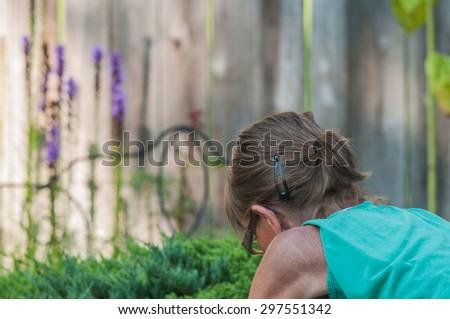 Middle-aged female tends to garden with floral background in front of a rustic wooden fence. - stock photo