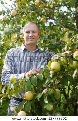 Middle-aged man surrounded by  apple trees at orchard