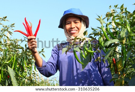 Middle aged woman farmer, with red organic chili on hand - stock photo