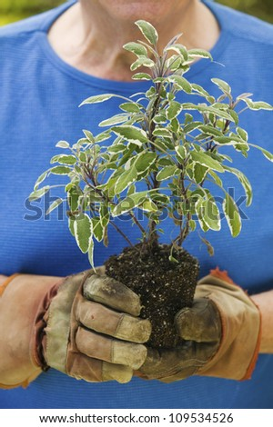 Midsection of a senior man holding a plant - stock photo