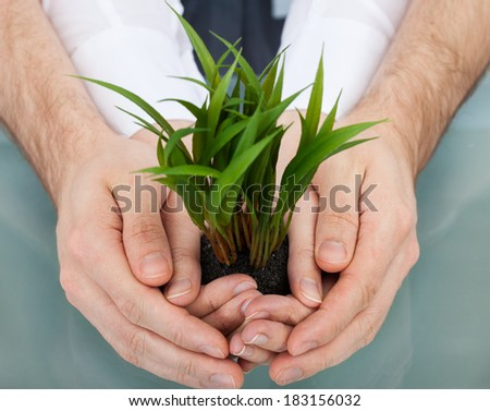 Midsection of businesspeople holding plant in cupped hands at table