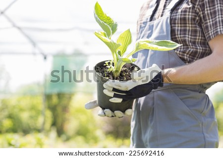 Midsection of gardener holding potted plant at nursery - stock photo