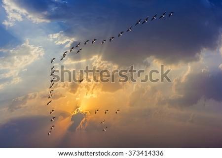 migrant bird in the blue sky - stock photo