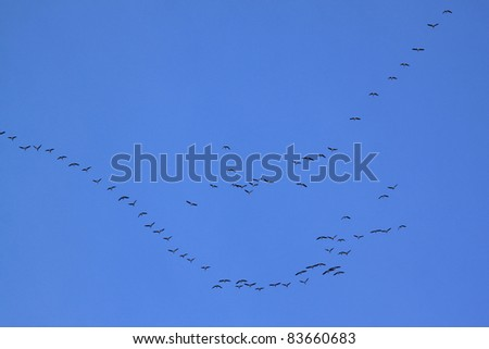 Migrating birds forming a V formation. Ornithology concept. - stock photo
